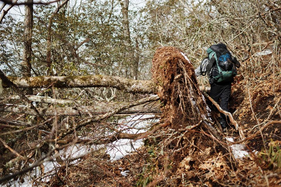 Appalachian+Trail-015-2418479598-O