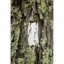 Appalachian+Trail-049-2418854543-O thumbnail