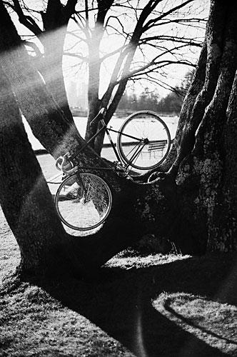24-bikes-chris-webber