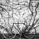 33-bikes-chris-webber thumbnail