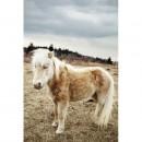Appalachian+Trail-017-2418479597-O thumbnail