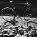 11-bikes-chris-webber thumbnail
