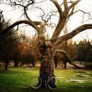 15-bikes-chris-webber thumbnail