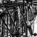 19-bike-messengers-chris-webber thumbnail