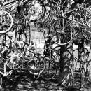 23-bike-messengers-chris-webber thumbnail