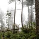 West-Coast-Trail005 thumbnail