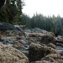 West-Coast-Trail013 thumbnail