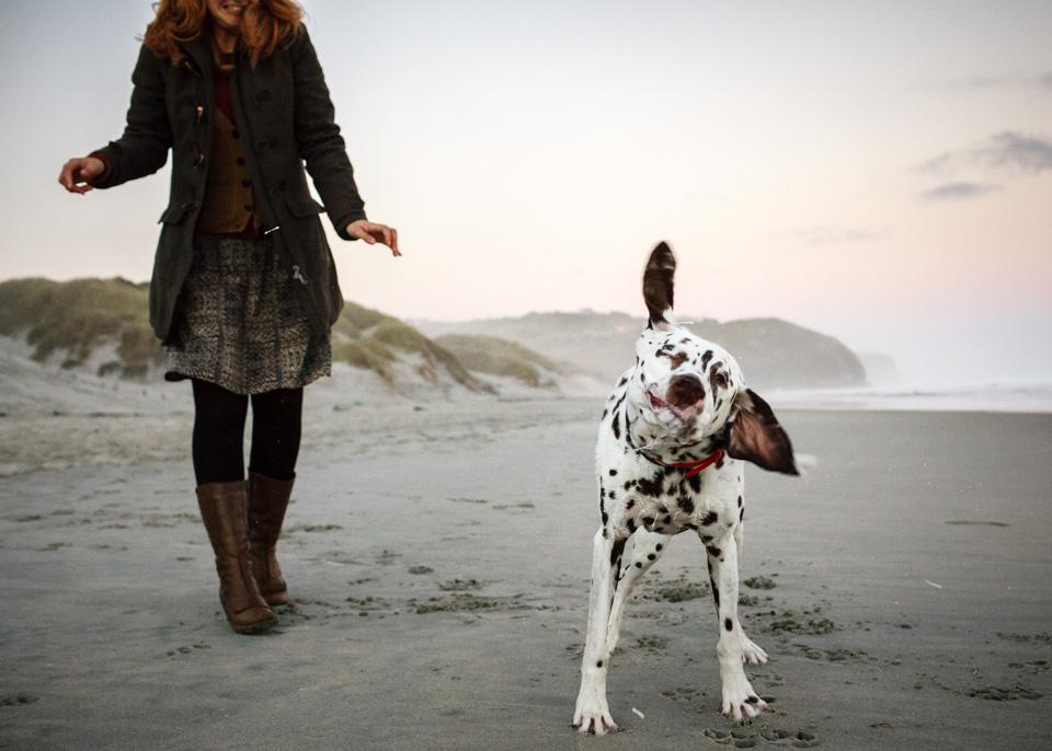 Monty-dalmatian
